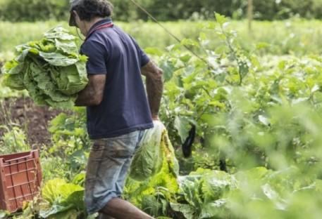 Centro de Apoio e Promoção da Agroecologia (CAPA) completa 43 anos de existência