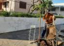 Mutirão para plantio de árvores em Venâncio Aires/RS