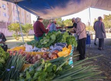 Feiras Agroecológicas: entrelaçando comunidades do campo e da cidade